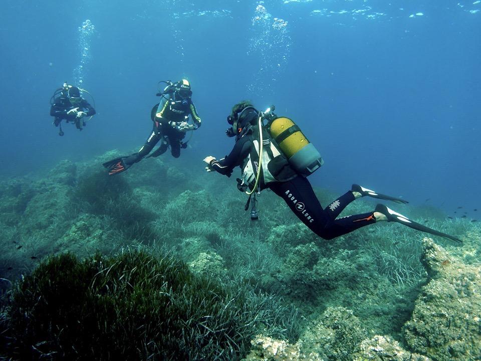 plongee-nice-diving-club-subvision-plongeur herbier
